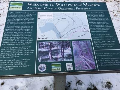 Willowdale Meadow